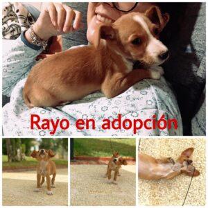 Rayo-13dc63d1